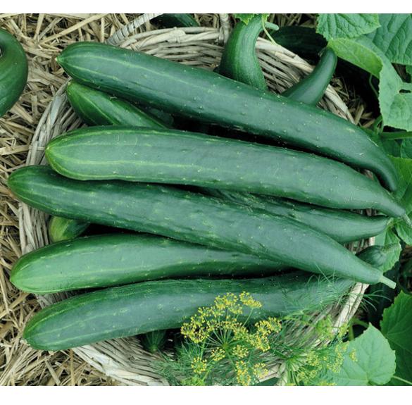 Salátauborka/nagy kovászos - vegyszermentes, átállásos bio