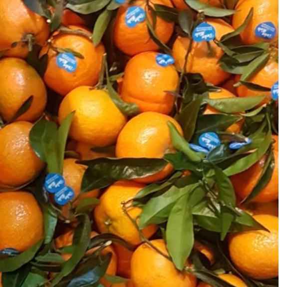 Kezeletlen mandarin