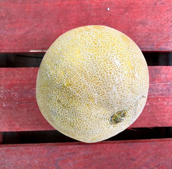 Sárgadinnye - átállásos dinnye (0,7-1 kg)