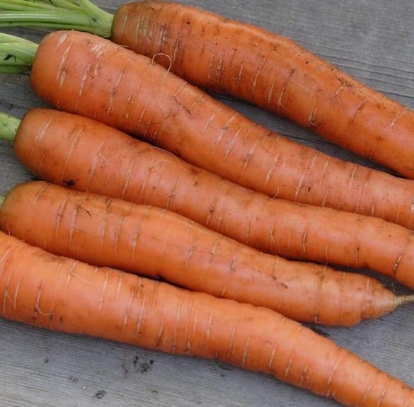 Bio sárgarépa